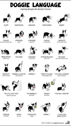 """You cant be too busy to explore this: """" Dog Language: What You Need To Know"""""""
