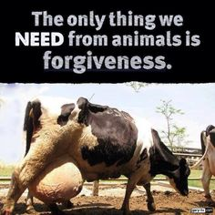 dirty dairy: The only thing we need from animals is forgiveness