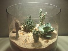 In this post I will show some terrarium types and how to maintain them. Altogether I know about 5 different types of terrariums. Cacti- Cacti terrariums love dry surroundings, so it's be… Terrarium Diy, Terrariums, Small Terrarium, Glass Terrarium, Mini Cactus Garden, Cactus Flower, Garden Pots, Flower Pots, Garden Ideas