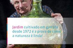 Jardim cultivado em garrafa criou seu próprio ecossistema sem intervenção humana! Em 1960, David Latimer decidiu dar utilidade a um garrafão de vidro. Veja: