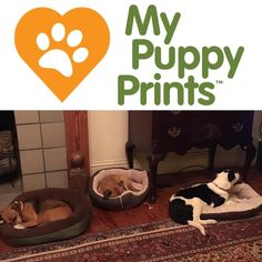 #personalized #actual #print #inkless #wipe #kit #puppy #dog #pawprint #Louisiana #Catahoula #Leopard #new #family #edition #forever #home #rescuedog #love #slumber #party #puppies My Baby Prints' sister company! www.mybabyprints.com