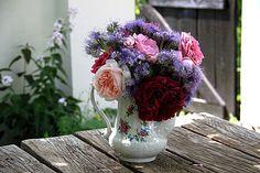 Roses Eglantyne, Charles Rennie Mc Intosh, Souvenir de la Malmaison, Salet, William Shakespeare, Black Prince, Yolande d'Aragon  + phacelia tanacetifolia