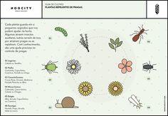 Cada planta guarda em si pequenos segredos que nos podem ajudar na horta, saiba que plantas funcionam para repelir ou evitar determinado tipo de pragas!