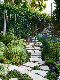 Cottage garden stone path and ivy fence .. ideas and design