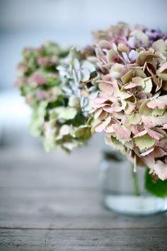 Hortensias ¡me encantan! #hortensias #love #cute #flower #cool #design #deco #idea #eco