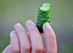 Cum recunoaştem mugurii de rod la măr   Paradis Verde Paradis, Ale, Ethnic Recipes, Green, Plant, Ale Beer, Ales, Beer