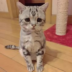 This is Luhu. | This May Be This Cutest, Saddest Cat Ever