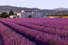 Campos de lavanda, Provence, França - 10 paisagens de tirar o fôlego pelo mundo   Nômades Digitais