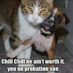 The new relationship between cats and dogs. Lol