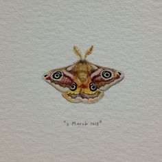 Day 70 : Emperor Moth. Inspired by a phenomenal artwork I saw tonight created by my friend Marlon. 28 x 19 mm. #365paintingsforants #emperor #moth (at Vredehoek)