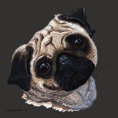 My daughter loves pugs. She has said that if she ever got a dog, she'd name him 'Jack Sparrow'. Sadly me and my son are allergic. I started practicing digital painting and my first piece is for my daughter.