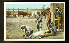 Cowboys In Corral Branding Cattle ~ Detroit Phostint ~ C. 1910's