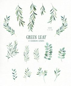 Green Leaf Watercolor clipart by everysunsun on /creativemarket/