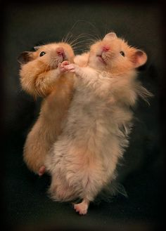 Hamsters by emin kuliyev on 500px