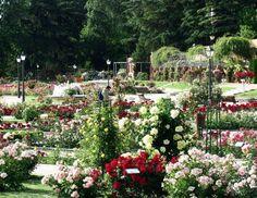 Rosaleda del Parque del Oeste, Madrid