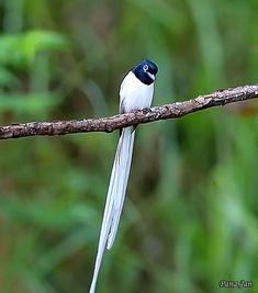 Pretty Birds, Beautiful Birds, Beautiful Pictures, Bird Gif, Illusion Art, Birds 2, Unique Animals, Exotic Birds, Vintage Birds
