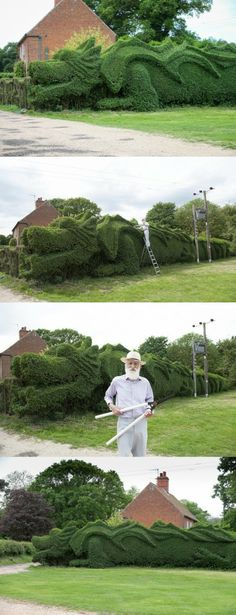 Gardener spends 10 years trimming garden hedge into 100ft dragon