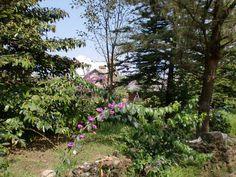 The gardens at Kurisumala. Photo by Hadrian Mar Elijah Bar Israel.