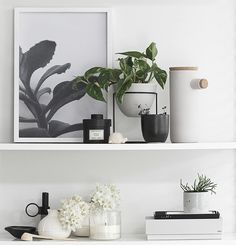 T.D.C | Plants on Shelf from Sill_life