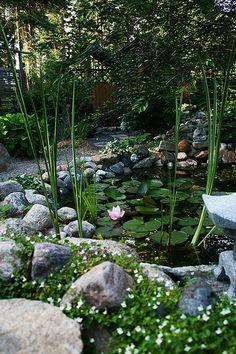 Pia Johansson - Garden View- Pond Area