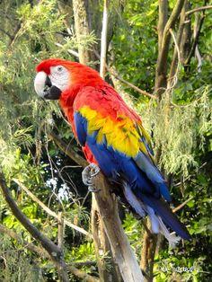 El maravilloso arco iris plasmado en los plumajes del cielo, mira con ojos felices los caños y los esteros....