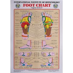 "Free Printable Reflexology Charts | Int. Institute Of Reflexology Foot Chart 23 X 30"" - Charts - Massage ..."