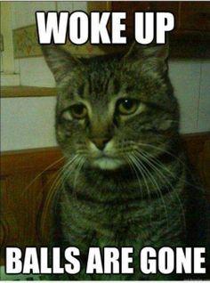 Jesus...Poor cat hahaha! Fuck that!
