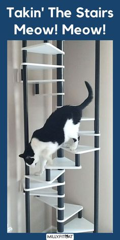 For cat fitness and exercise you can't beat climbing. The MillyFitcat Spiral Cat Tree was designed for active cats. The Cat Ladder leads up to a cushy Cat Bed on top. The unique design of this Cat Furniture creation makes it fun for kitty to climb as well as interesting to watch the action also. The best Cat Tree idea is the one that holds your pet's interest. Click or Claw over to our Etsy Shop for a full description and available sizes. Meow! #cattree #cattower #cattreetower #catfurniture Stair Climbing, Cat Climbing, Cool Cat Trees, Cat Exercise, Tree Plan, Interactive Toys, Cat Furniture, Ladder Bookcase, Spiral