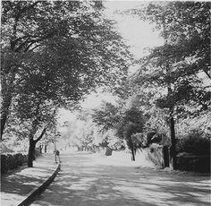 Bent lane, Prestwich in 1959