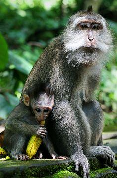 Monkey Forest Sanctuary, Bali, Indonesia