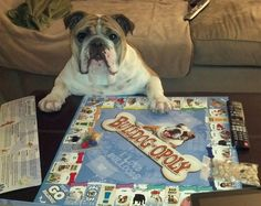 Bulldog-Opoly  He plans to buy all the Butcher Shops on the block !