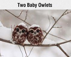 Nur zwei Baby-Eulen on http://www.drlima.net