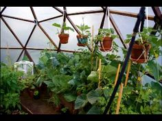 Grow Domes and Other Inexpensive DIY Greenhouses