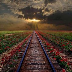 Estrada de ferro florida