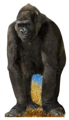Add this cardboard cutout, Gorilla Standee to your party supplies list. The Gorilla Standee is a great party decoration for your jungle or safari themed party. Safari Party, Jungle Theme Parties, Jungle Party, Jungle Safari, Jungle Animals, Party Props, Party Themes, Gala Themes, Party Ideas