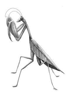 praying mantis tattoos and praying mantis drawings,sketches,and ideas - Google Search