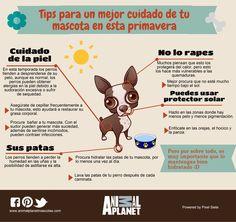tips para un mejor cuidado de tu mascota en esta primavera infografia animal planet - Google Search