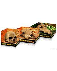 Exo Terra Primate Skull - Other - Vivarium Decor - Blue Lizard Reptiles - Reptile Shop