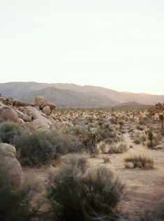 A sunny Joshua Tree Engagement Session in California complete with the coolest couple. Engagement Session, Deserts, Nature, Naturaleza, Postres, Dessert, Nature Illustration, Off Grid, Plated Desserts