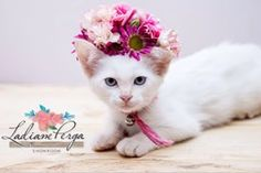Carlota, my sweetest cat. Flower crown by LADIANE PERGA