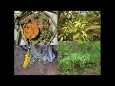 Medicinal Rice P5M Formulations for Xanthium Excess: Pankaj Oudhia's Med...