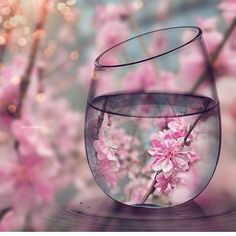So much clarity is offered when looking through the full half of the glass. It brings that change in perspective that is needed when you find yourself looking through the empty half of the glass.  #mentalhealth #strength #brave #strongwoman #strongman #mindfulness #love #selflove #loveyourself #selfcare #monday #anxiety #depression #eatingdisorder #edrecovery #prorecovery #fff #f4f (Pic via @travels.destinations)