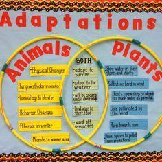 plant and animals adaptations venn diagram - Google Search