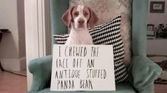 This dog who got hardcore shamed for eating the panda bear. | 31 Dogs Who Failed So Hard They Won
