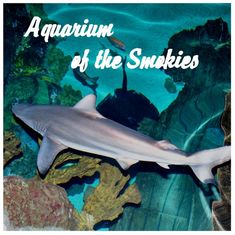 See sharks, jellyfish, penguins and more! At the Ripley's Aquarium of the Smokies!