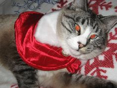 My cat at Christmas.  Meowww