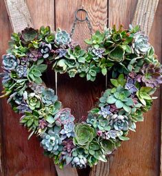 Living succulent heart wreath - Spring by Windmill Floral Design Succulent Gardening, Cacti And Succulents, Planting Succulents, Container Gardening, Suculentas Diy, Cactus Y Suculentas, Garden Art, Garden Design, Letter Planter