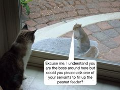 Excuse me, I understand you are the boss. . . .