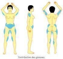 La morphonutrition pour maigrir aux endroits cibles - CareVox
