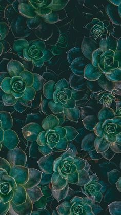 plants, wallpaper, and green image Succulents Wallpaper, Plant Wallpaper, Green Nature Wallpaper, Green Wallpaper Phone, Dark Green Wallpaper, Nature Iphone Wallpaper, Chevron Phone Wallpapers, Cute Wallpapers, Green Backgrounds